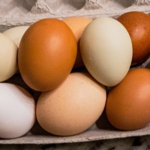 many different colored eggs
