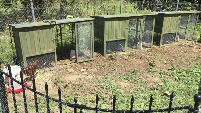 ware chicken coops